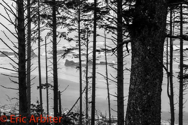 Beach Through the Trees, Pacific Northwest