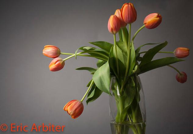 Amy's Tulips, still life