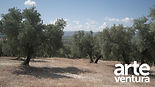 Artevuentura-landschap2.jpg