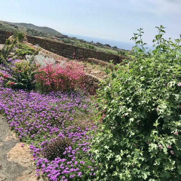 Giardino Salvia e Rosmarino.jpeg