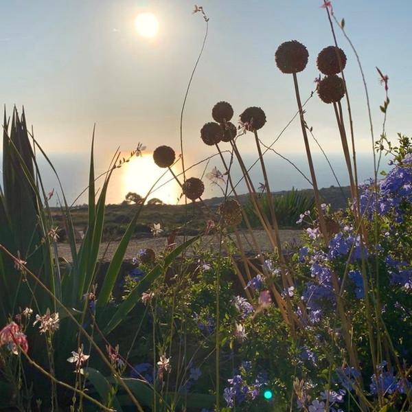 Tramonto Salvia.jpeg