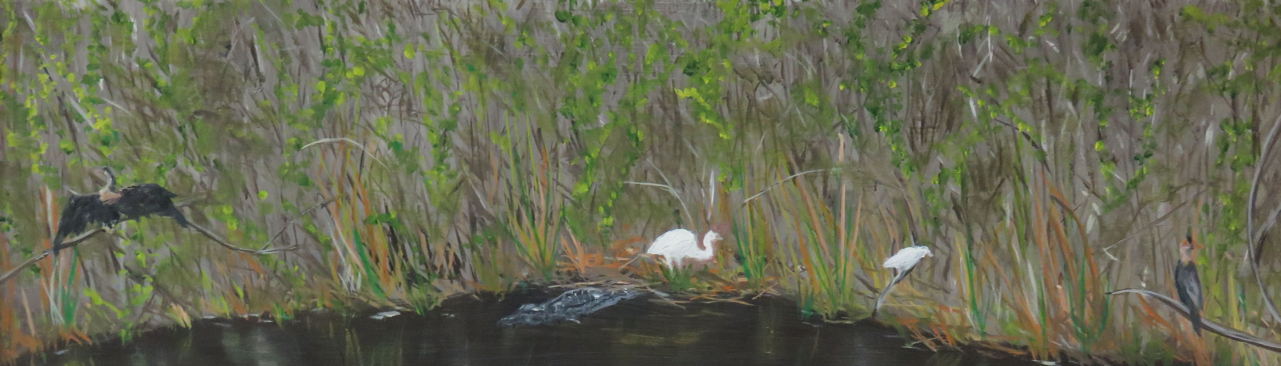 Everglades with aligator, egrets and anhingas