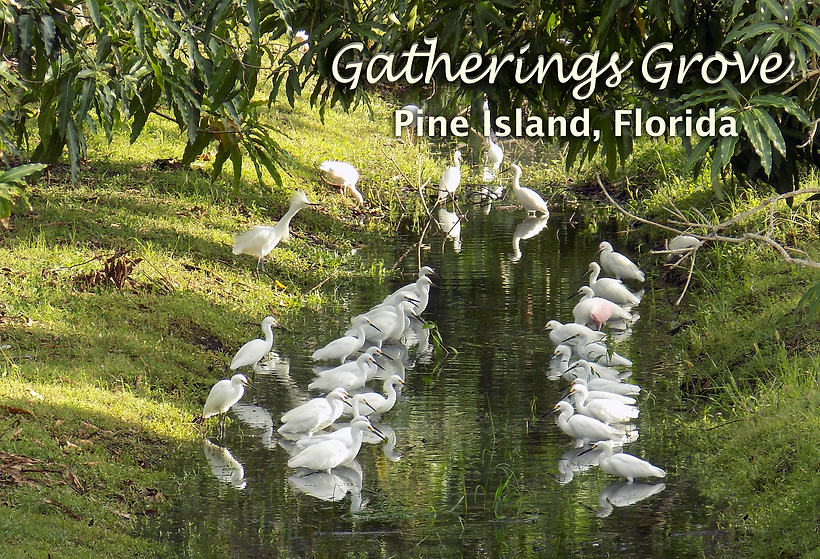 Gatherings Grove Birds reduced copy.png