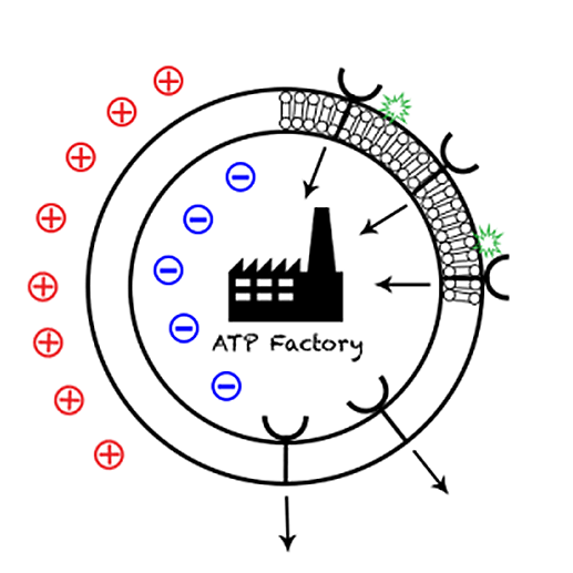 pemf CELL PRODUCTION
