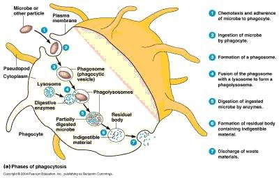 PEMF Detoxification