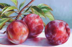 Lola's Plums