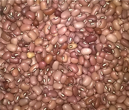 Red Caloona Cowpea