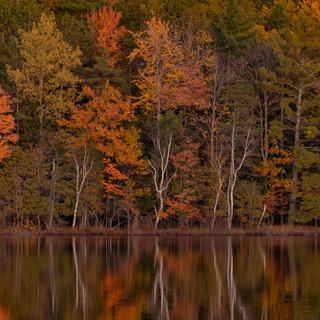 White Birch Reflection.jpg