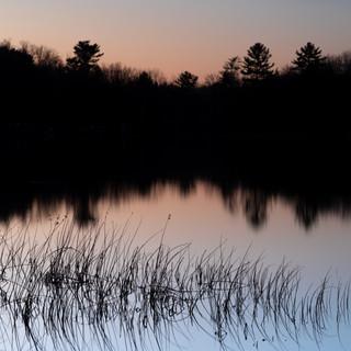 Thayer Reeds Still Sunset.jpg
