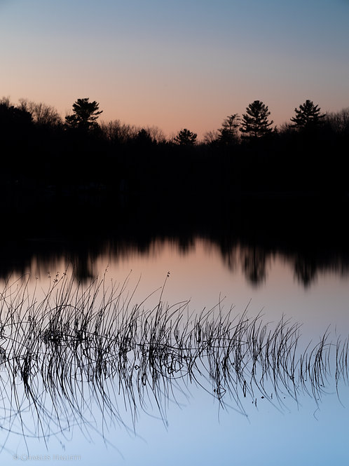 Thayer Lake Reeds Sunset