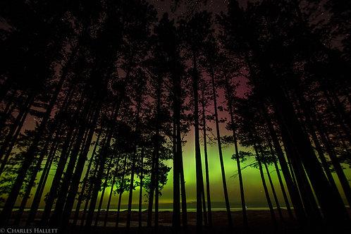 North Woods Aurora