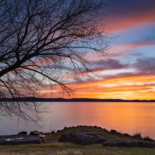 Torch Tree Sillouette Sunset.jpg