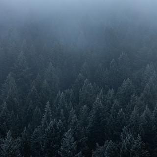 Moody Utah Pine Forest.jpg