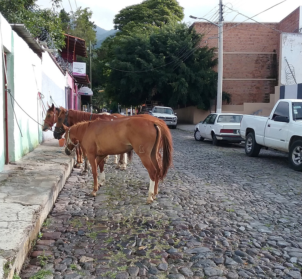 Horses on Ajijic street, Lake Chapala