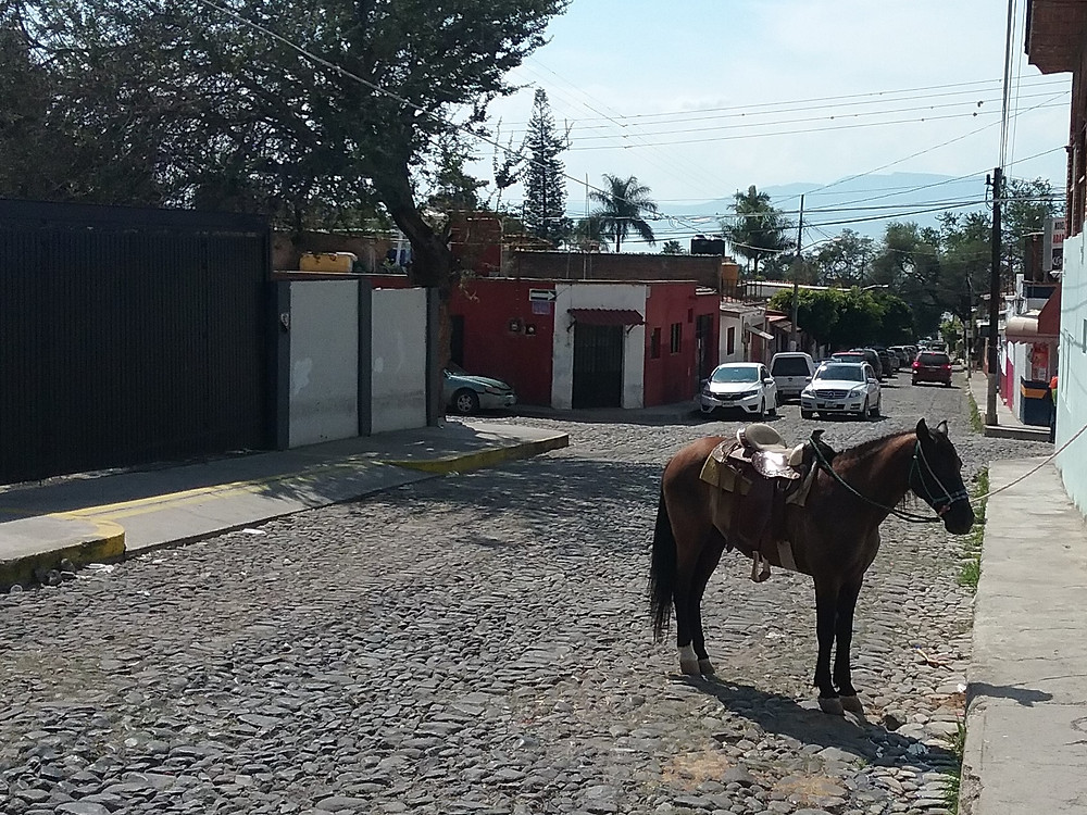 Ajijic street scene with horse tied out in the road
