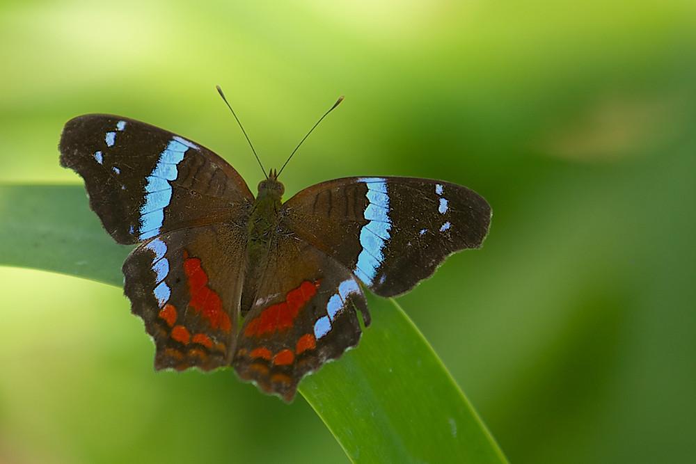 Butterfly in Ajijic, Mexico