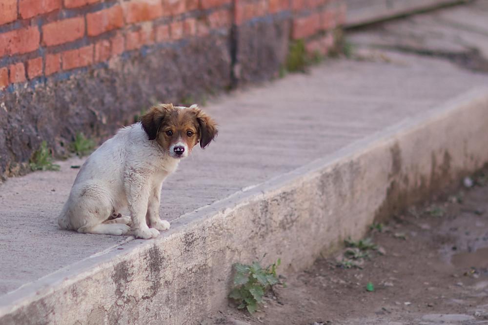 Stray dog and high sidewalk in Ajijic