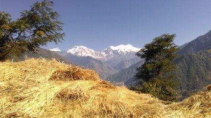 Golden field and mountains, Nepal