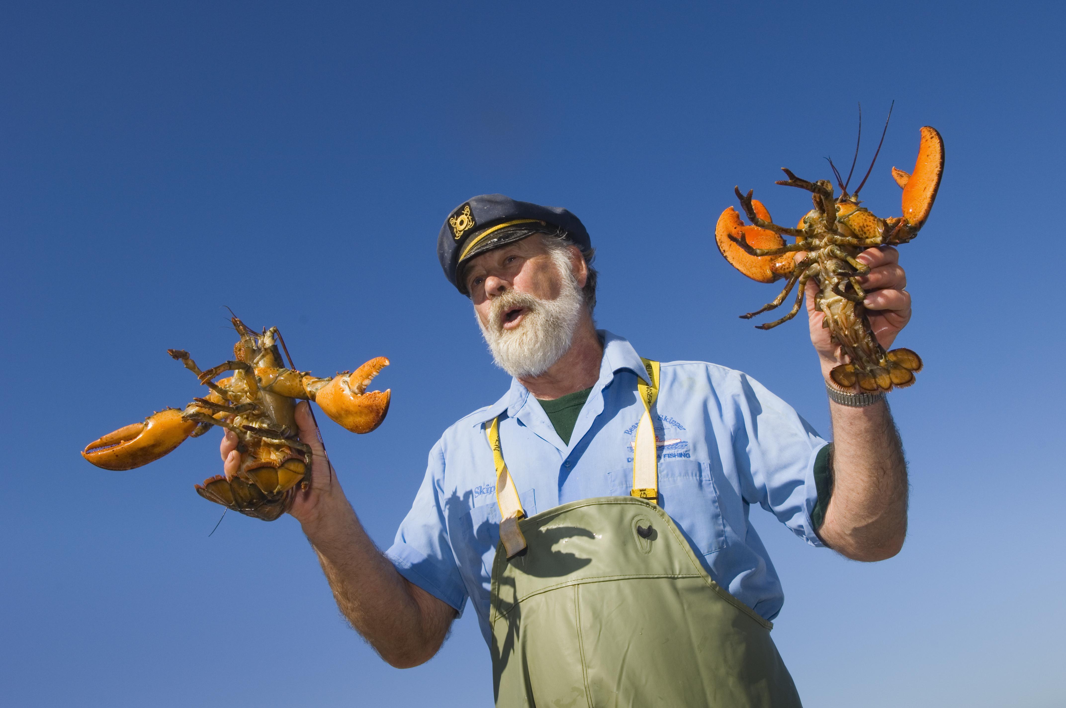Lobster essen