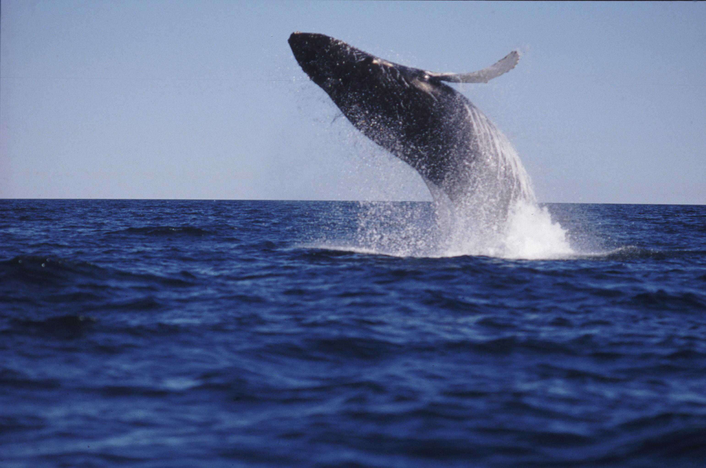 Walbeobachtung Nova Scotia