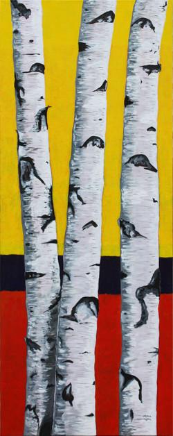 Birch Trees in the Arboretum