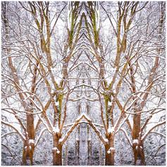 Nature's Church