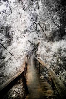 Channing Philbrick Bridge