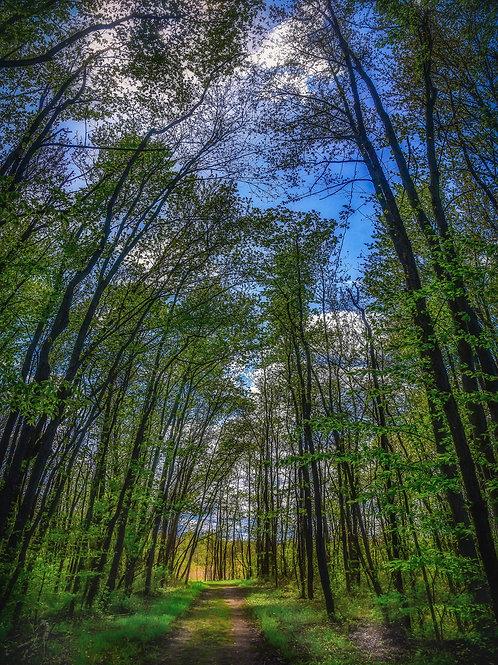 White Brook Nature Area Path