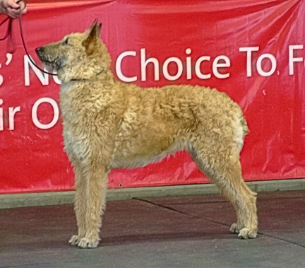ghia best in show BSDA open