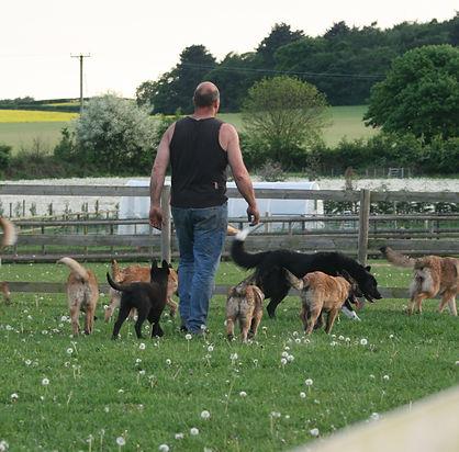 dogs field 20-05-10064.JPG