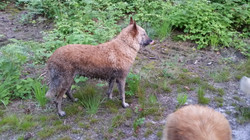 Ghia loves the mud