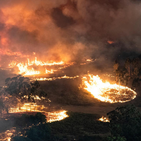 The Climate Change Hoax: A Quick Look at the Australia Bushfires