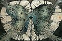 Spinal-Cord-final-824x547.jpg