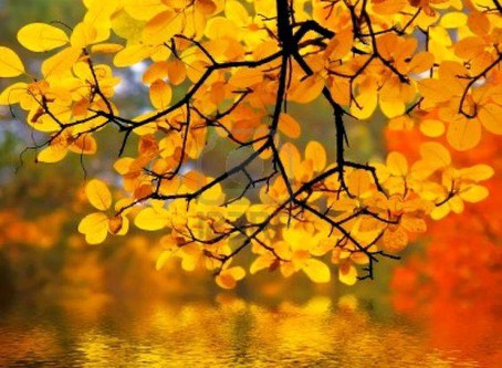 Autumnal Equinox:            Embodying Harmony Practices