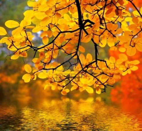 Autumnal Equinox:            Embodying Harmony Practices