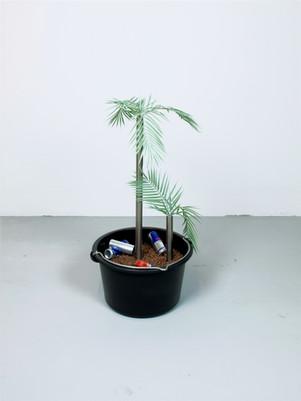 Jugendzimmerpflanze