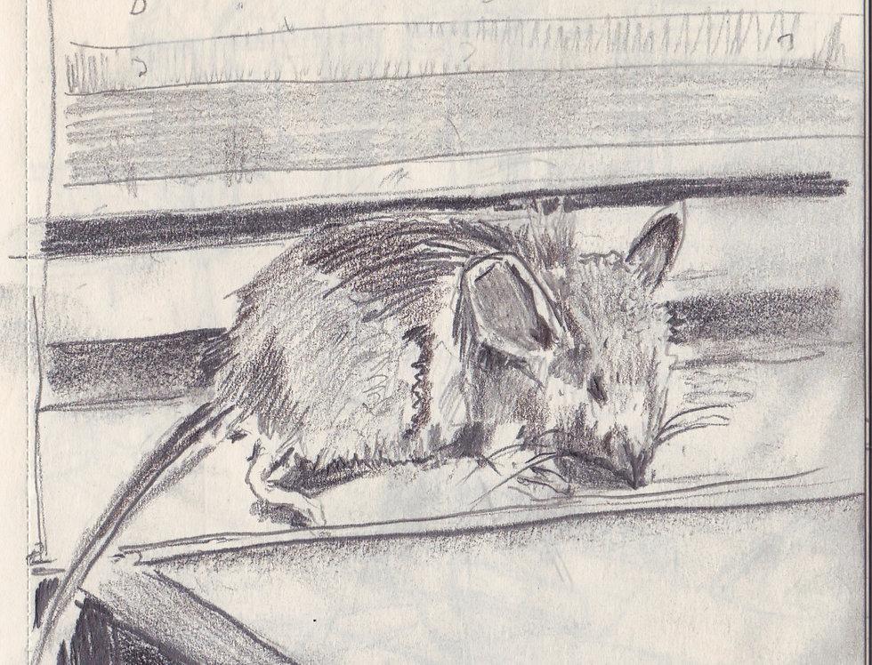 sketch 134