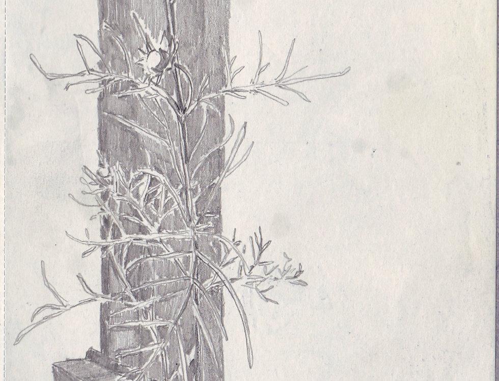 sketch 074