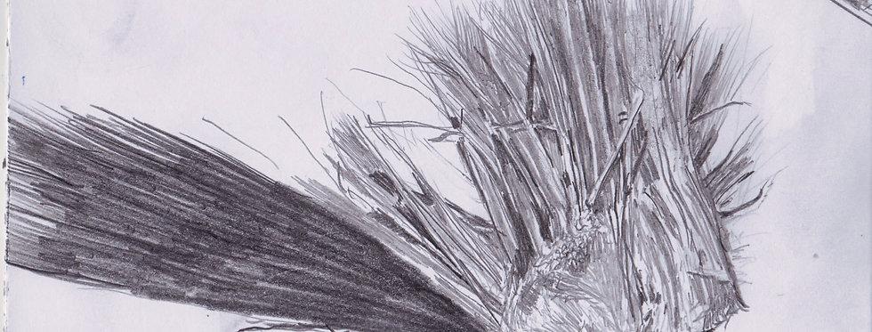 sketch 032