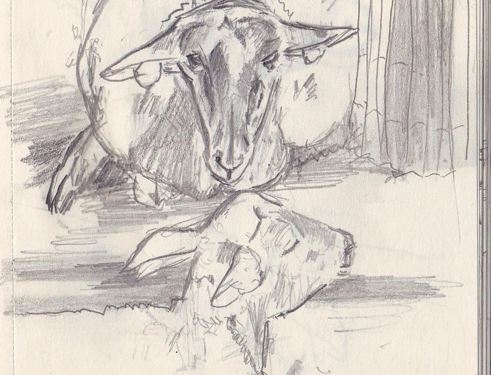 sketch 080