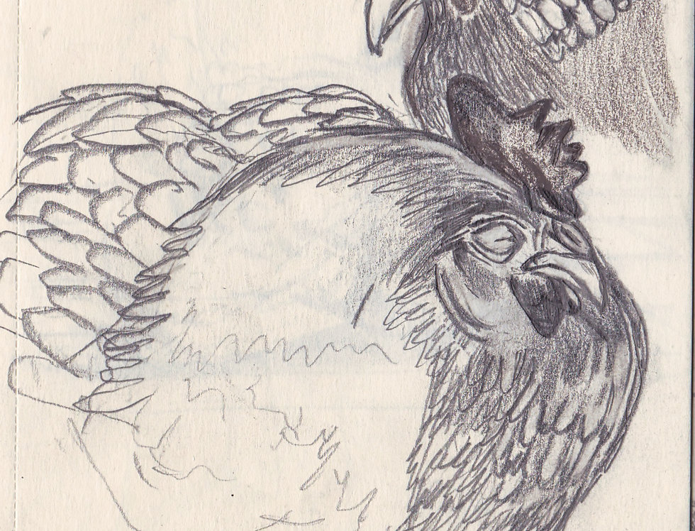 sketch 129