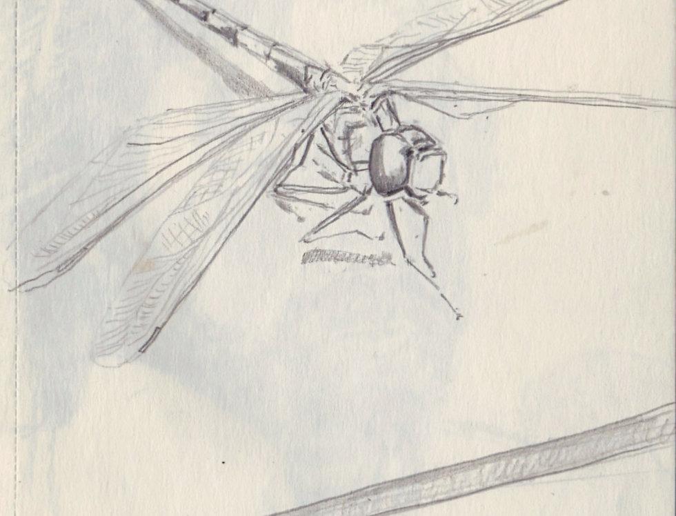 sketch 005