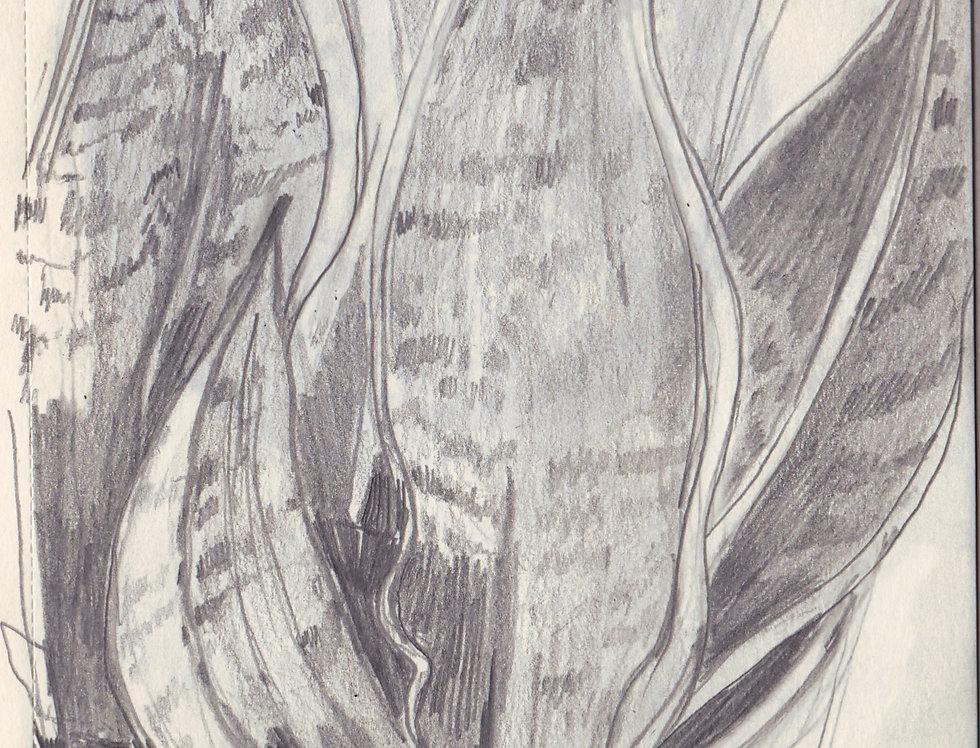 sketch 104