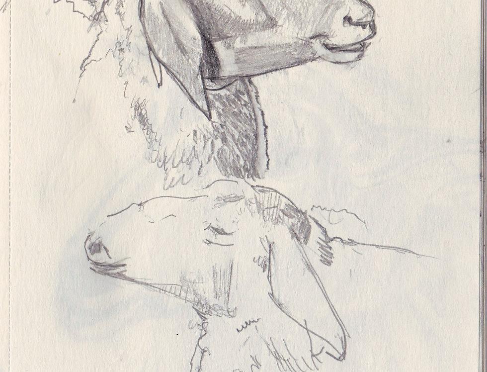 sketch 079