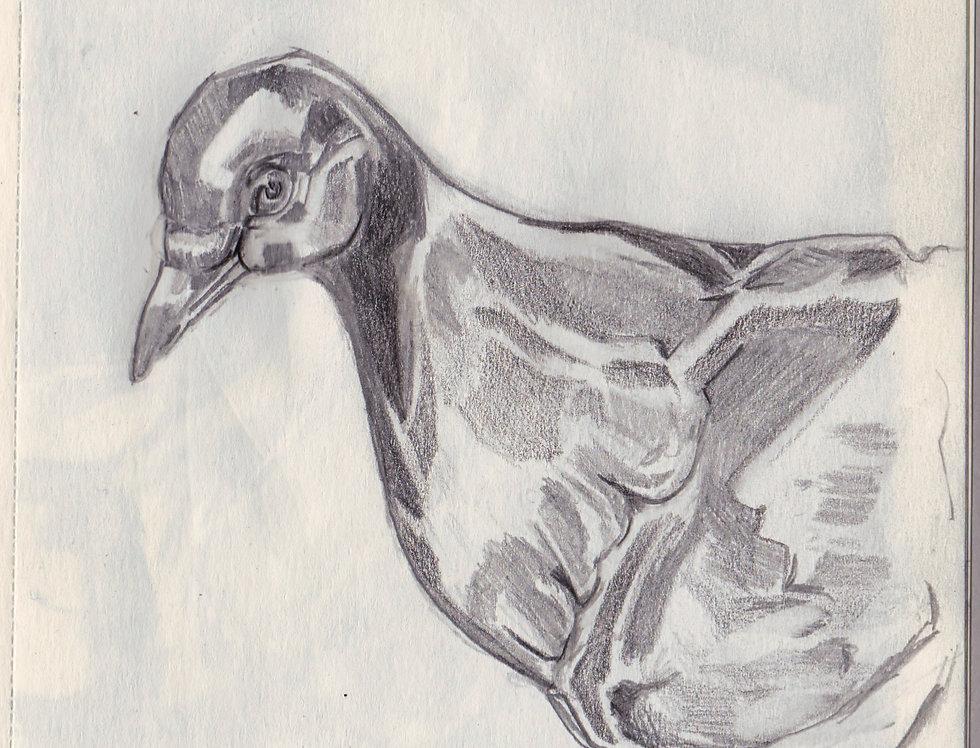 sketch 086