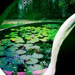 Lotus View