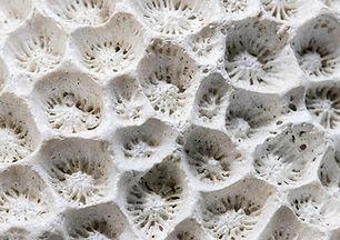 White coral texture macro photo. Dry sea