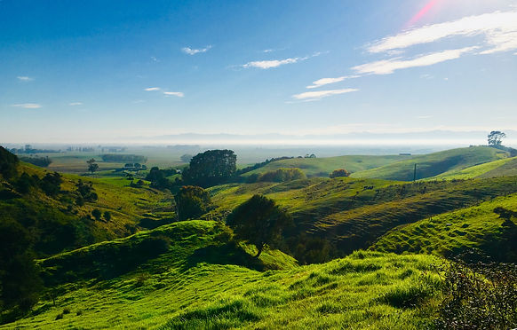 New Zealand. Green, fields in the country side.