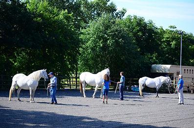 Jane & Casey Horses4Change.JPG