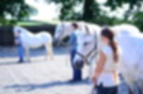 Horses4Change 038.JPG